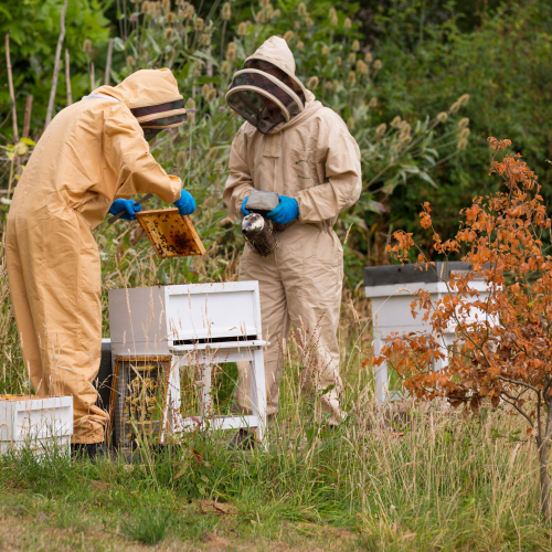 Beekeeping at HMP Prescoed. Taken by Ben Langdon, Mile 91, Prisoners' Education Trust